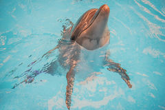 Dolphin in basin of oceanarium Royalty Free Stock Photography