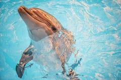 Dolphin in basin of oceanarium Stock Images