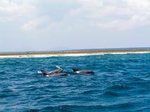 Dolphin. Beach africa coast ocean Stock Photos