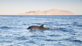 Dolphin in beautiful scenery Royalty Free Stock Image