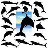 Dolphin black silhouettes on a color Royalty Free Stock Photos