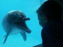 Dolphin and boy. Dolphin that seems to communicate with boy through a window at a dolphinarium Stock Photo