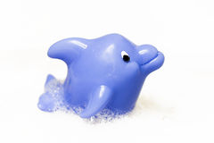 Dolphin children bath toy Stock Image