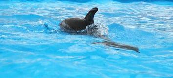 Dolphin Royalty Free Stock Photos