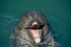 Dolphin Close Up Royalty Free Stock Photos