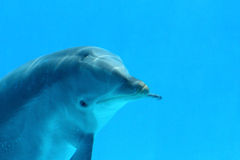 Dolphin Closeup Stock Photos