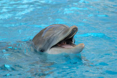 Dolphin closeup Stock Photography