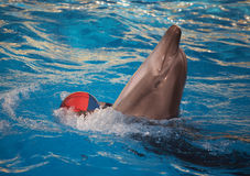 Dolphin dancing with ball Royalty Free Stock Image