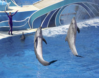 A Dolphin Days Show Entertains Visitors at Dolphin Stadium Royalty Free Stock Photography