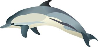Dolphin Delphinus delphis. The vector drawing of a сommon dolphin Royalty Free Stock Photos