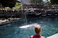 Vancouver Aquarium Dolphin show royalty free stock photo