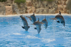 Dolphin Display Royalty Free Stock Photos