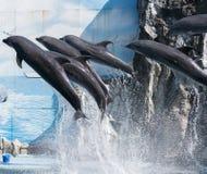 Dolphin Royalty Free Stock Photo