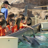 A Dolphin Entertains Visitors at Dolphin Point. SAN DIEGO, CALIFORNIA, JUNE 25. SeaWorld on June 25, 2015, in San Diego, California. A bottle-nosed dolphin Stock Image
