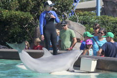 A Dolphin Entertains Visitors at Dolphin Point Royalty Free Stock Photos
