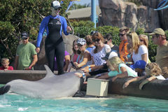 A Dolphin Entertains Visitors at Dolphin Point Stock Images