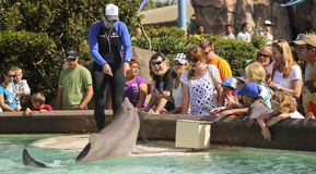 A Dolphin Entertains Visitors at Dolphin Point Stock Photos