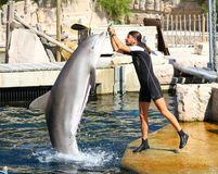 Dolphin exercising, jumping and playing. Royalty Free Stock Images