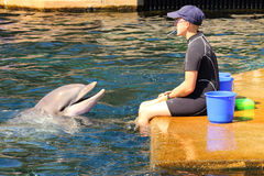 Dolphin exercising, jumping and playing. Royalty Free Stock Photo