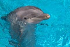 Dolphin face Stock Photo