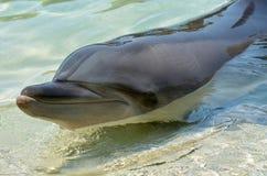 Dolphin face Stock Photos