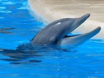 Dolphin Facing Upward Stock Images