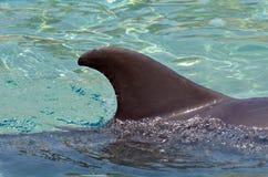 Dolphin fin Royalty Free Stock Photos
