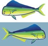 Dolphin Fish Stock Image