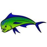 Dolphin Fish Stock Photos