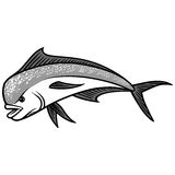 Dolphin Fish illustration Royalty Free Stock Image