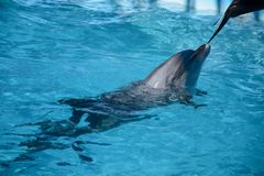 Dolphin fish live sea nature. Dolphin fish living sea nature underwater world to swim sea life stock photo