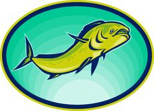Dolphin fish or mahi mahi Royalty Free Stock Photos