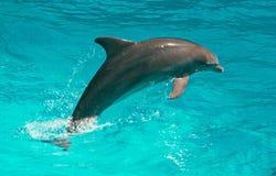 Dolphin. Stock Photos