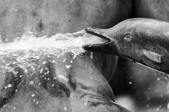 Dolphin fountain. Detail in black and white Royalty Free Stock Photo
