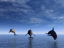 Dolphin in front. Three dolphins floating at ocean (view in front Royalty Free Stock Photography