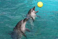 Dolphin Games Stock Photo