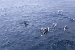 Dolphin group Stock Photo