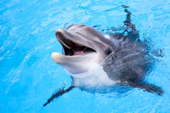 Dolphin. Happy dolphin smile joy water Royalty Free Stock Photos