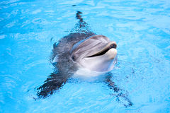 Dolphin. Happy dolphin smile joy water Royalty Free Stock Images