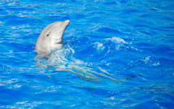 Dolphin having fun. Dolphin having fun in clear blue sea. Place for text Stock Photography