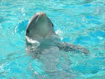 Dolphin head in water Stock Photos