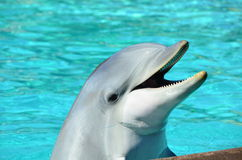Dolphin. A dolphin is a highly social animal stock images
