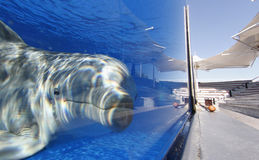 Dolphin at his water tank on a marine park Royalty Free Stock Photography