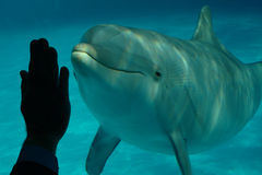 Dolphin and human hand 2 Royalty Free Stock Photo