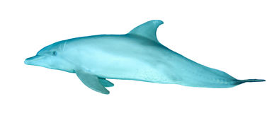 Dolphin isolated on while Stock Images