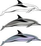 Dolphin isolated Stock Photos