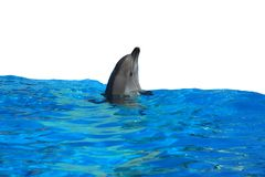 Dolphin. Isolated on a white background Stock Photography