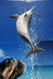 Dolphin jump Royalty Free Stock Image