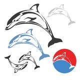 Dolphin jump Royalty Free Stock Image