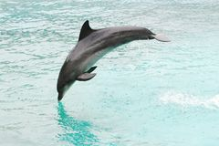 Dolphin Jump Stock Image